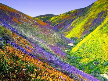 Spring flowering valley picture